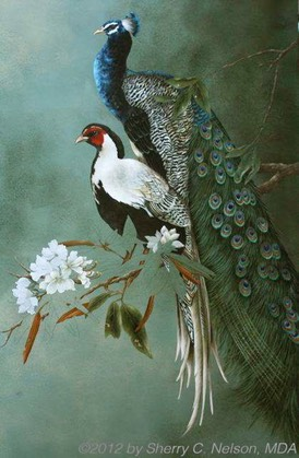 "12.  Indian Peafowl & Silver Pheasant, 18"" x 30"", $395.00"