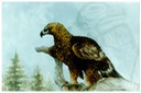 "#24.Golden Eagle (against Landscape background), 14""x18"" - $8.00"