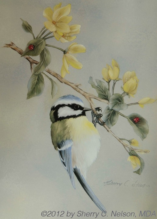 "27. Blue Tit, Painting Songbirds, 8"" x 10"" flex board - $110.00"