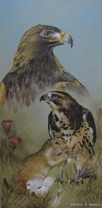 "3.  Golden Eages & Swainson's Hawk, 8"" x 16"" - $195.00"