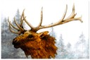 "#30.North American Elk - canvas-style background, 11""x14"" - $8.00"
