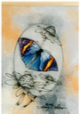 "#35.Indian Leaf Butterfly, 8""x10"" -$3.00"