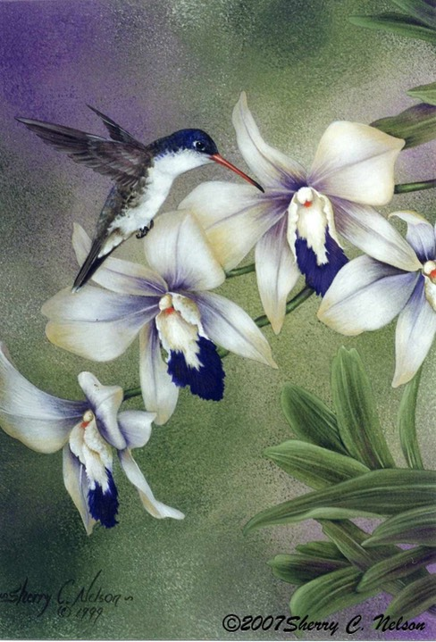 "38. Violet-crowned Hummingbird, male, 9"" x 12"" - $195.00"