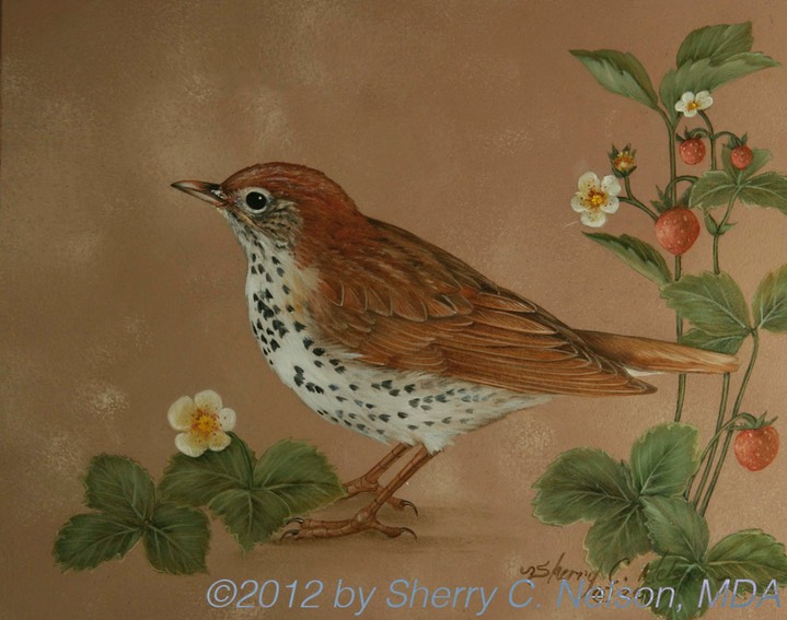 "40. Wood Thrush w/ Wild Strawberries, 10"" x 8"" - $165.00"
