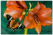 "#43.Amaryllis & Butterfly, 8""x10"" - $4.00"