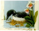 "#44.Common Loon & Lady's Slippers. 11""x14"" - $5.00"