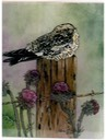 "#52.Common NightHawk, 11""x14"" - $4.00"