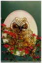 "#55.Fledling Great Horned Owl, 11""x14"" - $5.00"