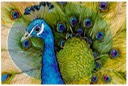 "#59.Indian Peafowl, 11""x14"" - $7.00"