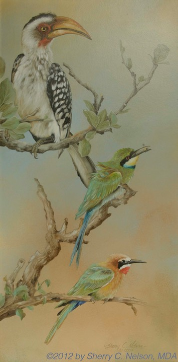 "7.  Yellow-billed Hornbill & Bee-eaters, 10"" x 20"" - $235.00"